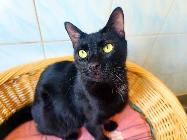Котик Світозар (1рік), лоток 5+, кот, кіт.