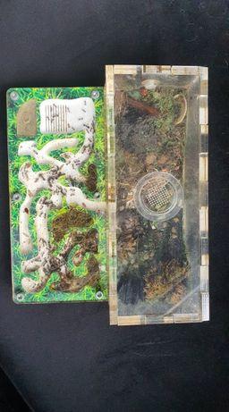 Formikarium dla mrówek + mrówki i dodatki.