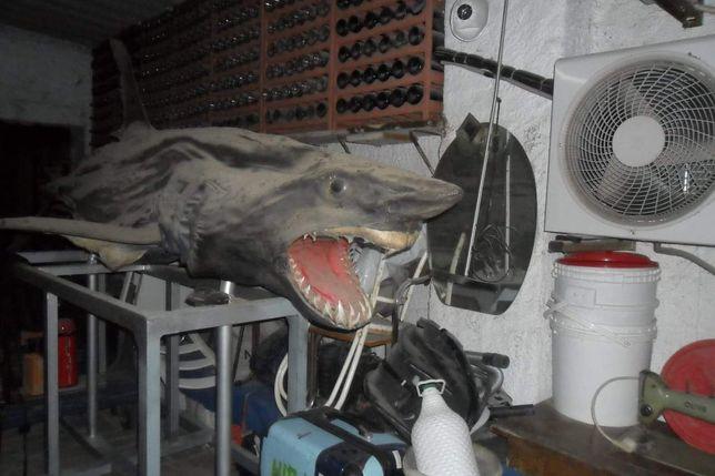 Embalsamar animais ou peixes