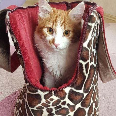 Сумка переноска для собаки кошки кота щенка котенка