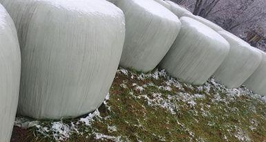 Sianokiszonka bela bele tegoroczne świeże