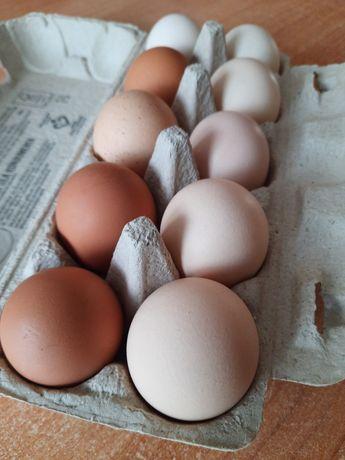 Jaja jajka wiejskie kurze