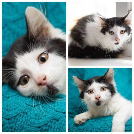 Крайне любвеобильный котенок Арамис, 5 мес, кот