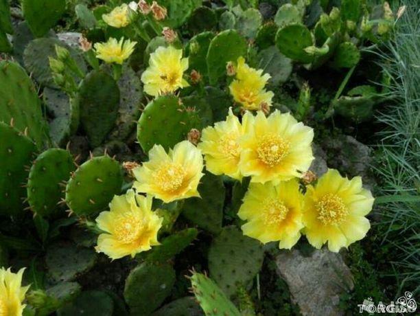 Только звонить!Продам многолетние цветы из своего сада