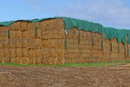 Fliz,agrowłóknina sprawdzony sposób na przechowywanie bel siana, słomy Pawłowiczki - image 1