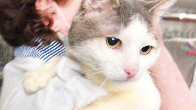 Любвеобильный котик Филя 1 годик (кот, коты, котята, котенок)