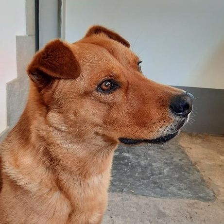 Собака 2 года ищет дом