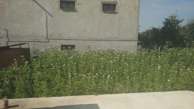 Покос травы.чистка участков от растительности.сотка 160.00грн.