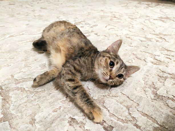 Котенок ищет любящих родителей