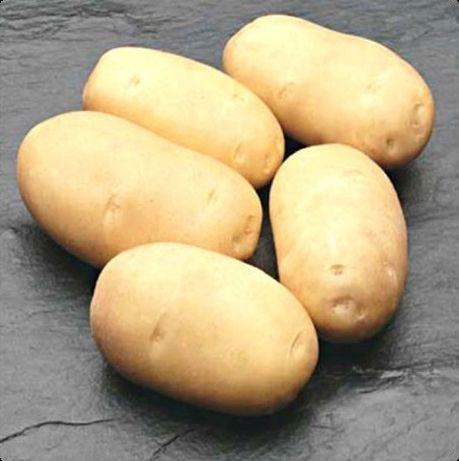 Ziemniaki jak sadzeniaki 40-55mm lilly gala melody