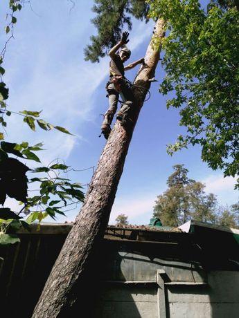 Спил обрезка деревьев