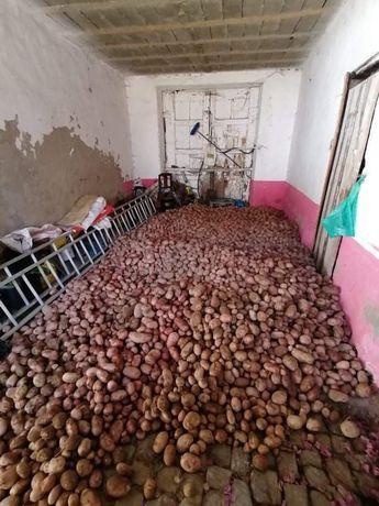 Batatas casaeiras