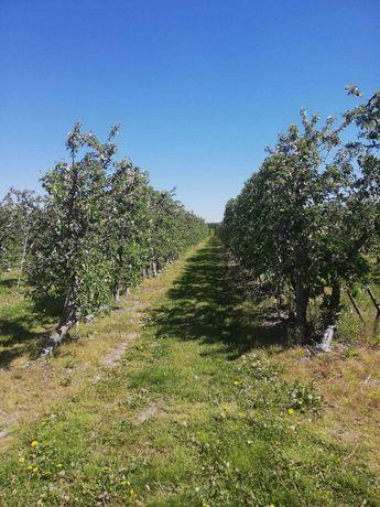 Działka rolna z sadem i możliwością siedliska