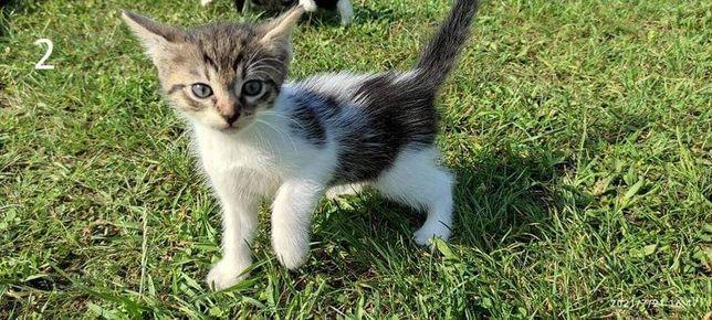 Piękne koty do oddania!!!