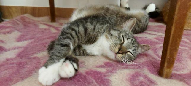 Полосатый котенок 10 месяцев