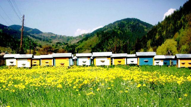 Натуральний бджолиний віск 22 кг.