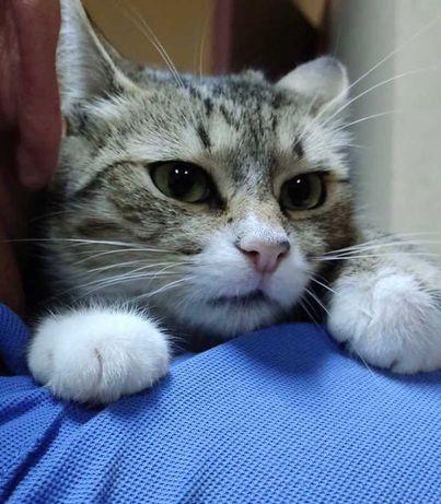 Кошки_коты_котята_отдам малышку 8 мес, стерилизована