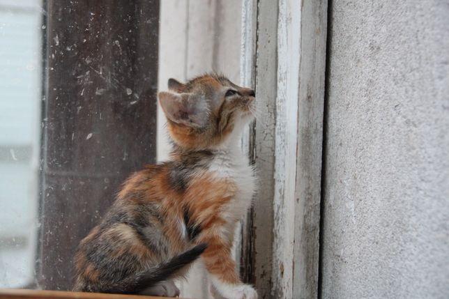 Котята в хорошие руки. Трехмастый котенок .рыжий котенок