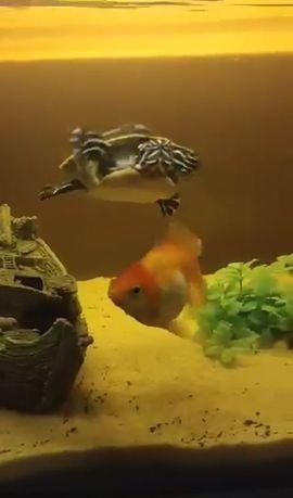 Akwarium 112l i żółw