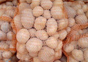 Ziemniaki jadalne Vineta Bellarosa Owacja