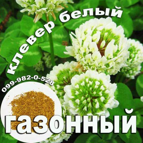 КЛЕВЕР белый продам С цветами газонная трава многолетний газон семена