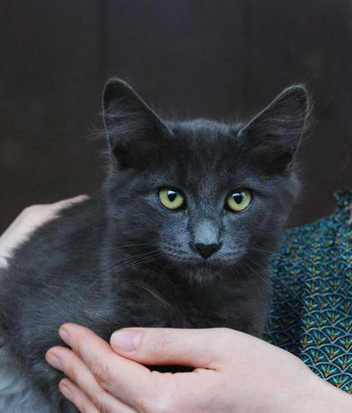 Красивый котенок, созданный для спасения и любви