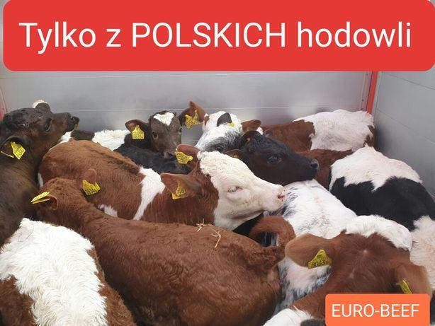 Cielaczki sprzedam Polskie bydło typowo hodowlane POLSKIE