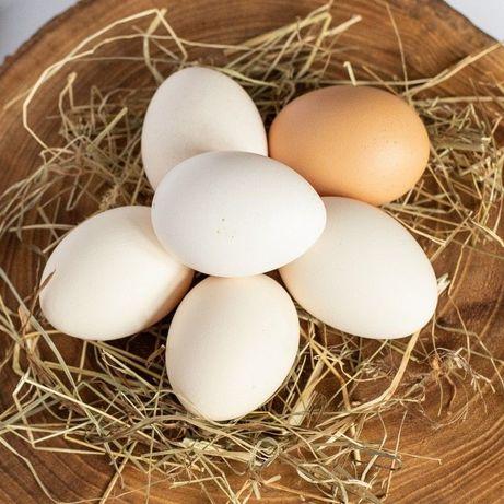 Jaja, jajka wiejskie , mleko z małego gospodarstwa