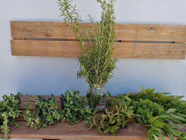 Aromáticas e Chás (Em planta ou ao molho)
