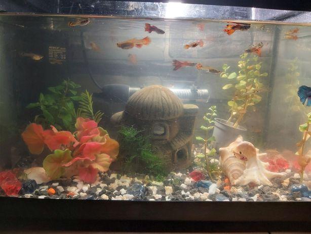 Sprzedam akwarium z życiem