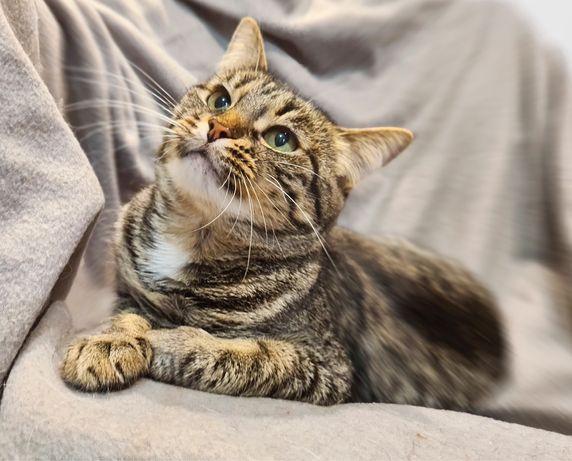 Ласковая кошка Варшава, 1 годик, стерилизована