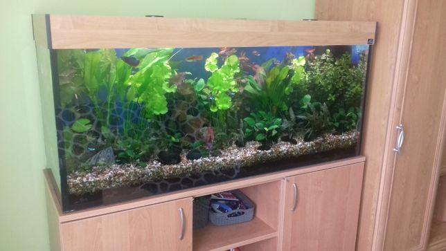 Sprzedam Akwarium wyposażone we wszystko łącznie z rybami