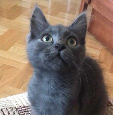 Котик шукає дім!