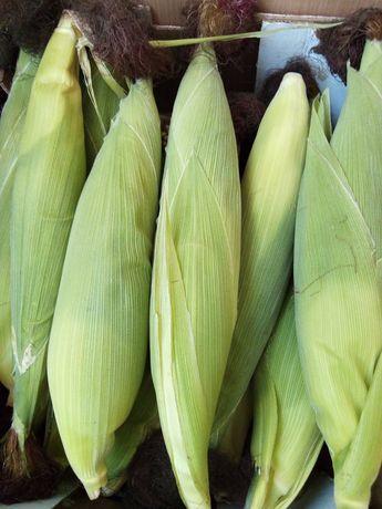 Maçaroca de milho fresca ENCOMENDA