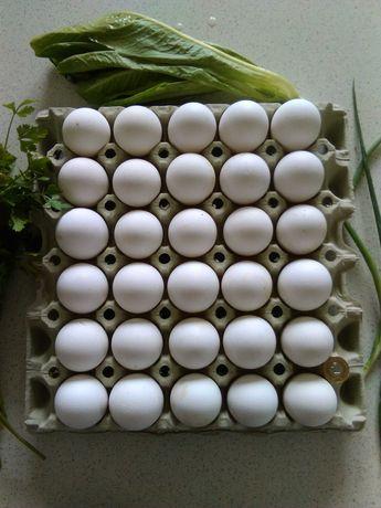 Sprzedam wiejskie jajka od kurek