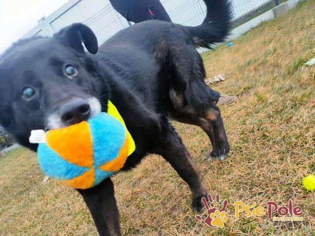 TYTANEK-superaśny psi przyjaciel prosi o dobry dom, adopcja