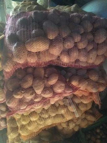 Ziemniaki odmiany Jurek i Bellarosa