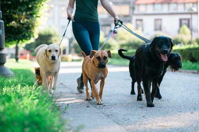 Dog Walking/Passeio de cães ou Estadia Familiar