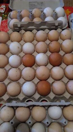 Jajka ekologiczne, z wolnego wybiegu, nioski naturalnie karmione