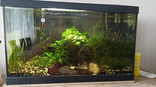 Akwarium 60l z życiem
