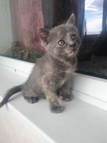 Подарую кошенят !