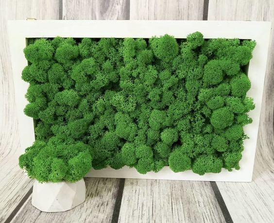 Стабилизированный мох ,панно на стену из мха,подарок из мха,кашпо !