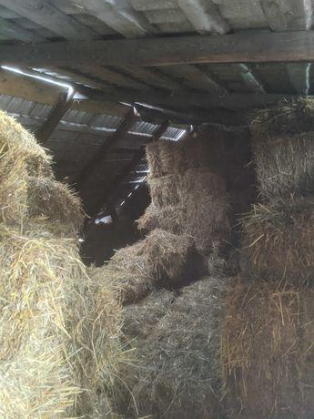 Пашисті тюки із вівсяної соломи