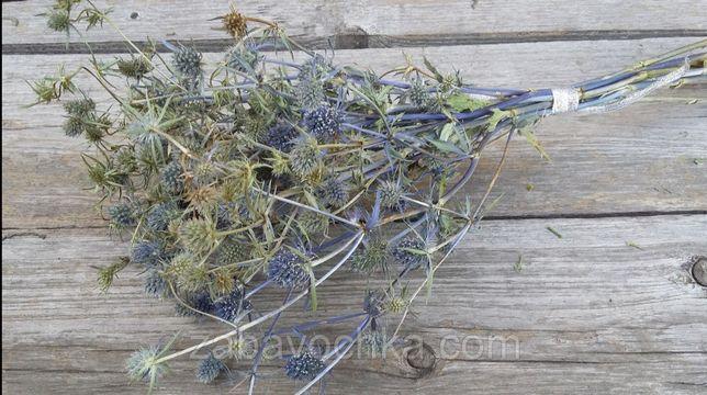 Синьоголовник, сухоцвіт, 10 гілок, 25 грн