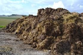 Obornik bydlęcy przepalony kompost sezonowany 3-letni