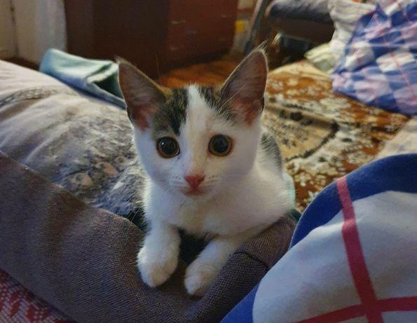 Девочка котенок в добрые, надежные руки!