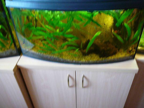 Akwarium 112l  dużo rybek i roślin, szafka.