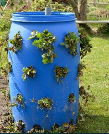 Beczki do ogrodu na truskawki wode