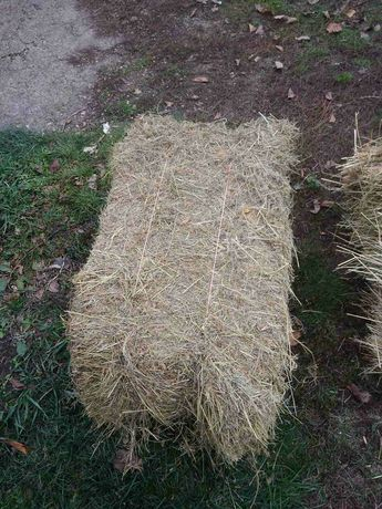 Продам зеленое сено в тюках