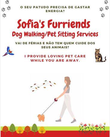 Pet sitting/Dog walker/Passeio e cuido de animais